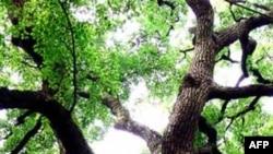 Rừng lá thấp