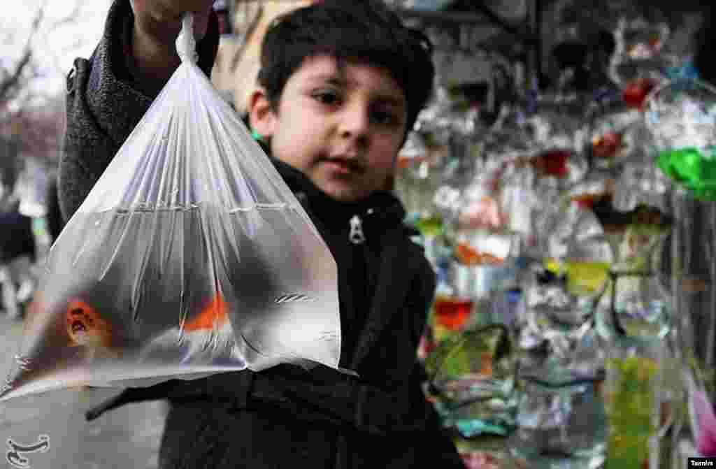 بازار خرید ماهی قرمز برای سفره نوروز عکس: عبدالرحمان رأفتی
