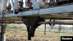 Warga setempat melewati bangkai gajah yang tersangkut di jembatan rel kereta api di wilayah Khunia, distrik Jalpaiguri, bagian timur negara bagian Bengala Barat (14/11).