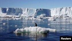 افزایش غیر عادی یخها در این منطقه باعث شده پنگوئنهای بزرگتر برای پیدا کردن غذا مسافت های بیشتری را طی کنند