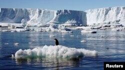 Seekor pinguin Adelie berdiri di atas bongkahan es yang mencair dekat stasiun penelitian Perancis di Dumont díUrville di Antartika.