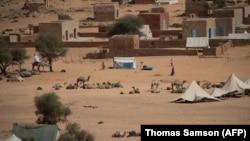 Des chameaux se reposent près d'Oualata en Mauritanie le 20 novembre 2018.