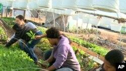 Marcy Clark ve çocukları meyve sebze yetiştirirken