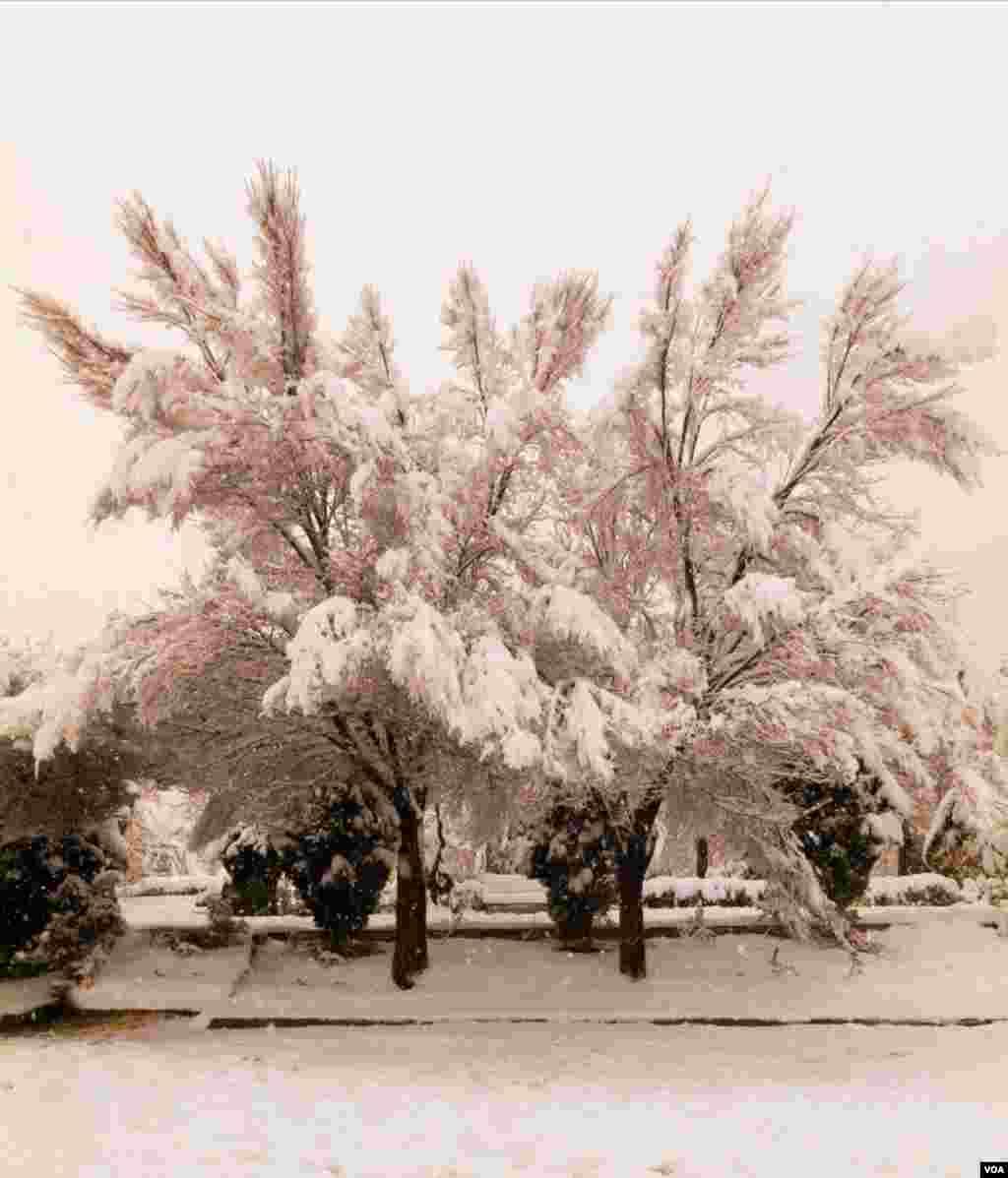 بلوار شاهین تهران عکس: کوروش (ارسالی شما)