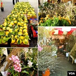 Flowers and fruits for TET celebration