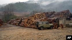 云南境内缅甸木材转运站