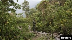 A park ranger tracks mountain gorillas in Virunga National Park in the Democratic Republic of Congo on August 19, 2010.