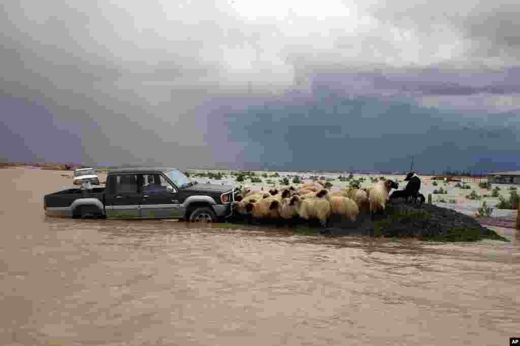 Sheep stay on a road not reached by Vjosa River water that flooded a village of Darzeze, Fier district, 115 kilometers (70 miles) south of capital Tirana, Albania. Floods caused by heavy rains over the last days have hit southern Albania, forcing the evacuation of hundreds of villagers after rivers flooded thousands of acres, hundreds of homes and many roads.