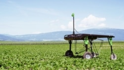 Quiz - Smart Farm Equipment to Greatly Reduce Use of Chemicals