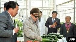 Lãnh tụ Bắc Triều Tiên Kim Jong-Il kiểm tra rau quả tại Viện Khoa học Thực vật ở Bình Nhưỡng, ngày 4/3/2011. Trong mấy tháng gần đây Bắc Triều Tiên đã đưa ra những lời kêu gọi khẩn cấp xin được viện trợ lương thực với số lượng lớn