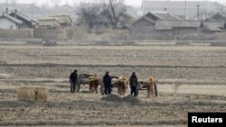 North Korean farmers walk past a field on Hwanggumpyong Island, near the town of Sinuiju, March 2, 2012.