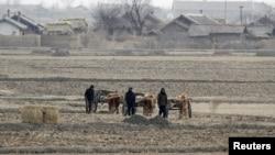 North Korean farmers walk past a field on Hwanggumpyong Island, near the town of Sinuiju, March 2, 2012.