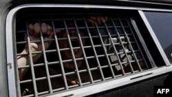 Арестованный в полицейском автомобиле