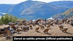 Kolonija beloglavog supa u Specijalnom rezervatu prirode Uvac, Foto: Bratislav Grubač