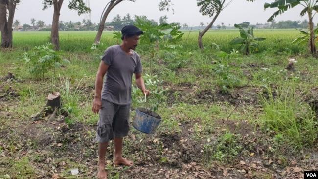 Petani Wahidin saat bekerja di lahan yang akan dibangun pura, Rabu (15/5/2019). Foto: Sasmito