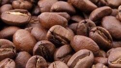 Huíla lança-se na produção de café - 1:15