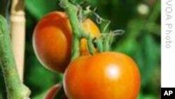美国社会活动家鼓励人们作兼职农民