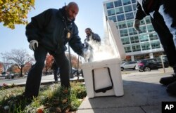 Pest Control Officers Gregory Cornes, left, uses a hand trowel to scoop-up dry ice before dropping it directly into rat burrows, as his co-worker Curtis Redman assist, near the Capitol building in Washington, Wednesday, Nov. 21, 2018. (AP Photo)