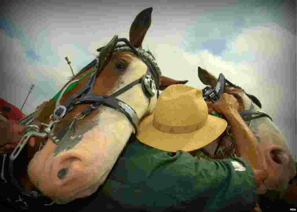 Фермер с лошадьми