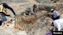 Trabajadores y paleontólogos del Instituto Nacional de Antropología de México recobran la cola de un dinosaurio en la municipalidad de General Cepeda, Coahuila.
