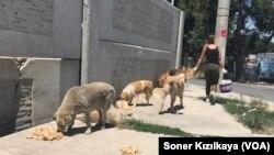 İnsanlardan gördükleri kötü muamele nedeniyle birçok köpek korku içinde karnını doyurmaya çalışıyor.