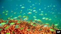 ปะการังเขตร้อนมีสารธรรมชาติที่อาจนำมาทำเป็นยาป้องกันรังสีอุลตราไวโอเล็ตจากแสงแดดได้