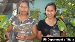 Two Honduran women graft coffee plants, a skill they learned through a program supported by Pathways to Prosperity.