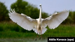 Birds might be smarter than we thought. Good news for the Great White Egret pictured here, Budapest, Hungary, 17 April 2016. (Photo EPA/Attila Kovacs)