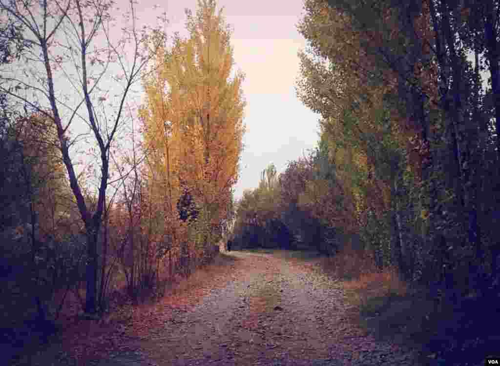 در حاشیه شهر محمودآباد درآذربایجان غربی - آبان ۹۶ عکس: (ارسالی از علیرضا)