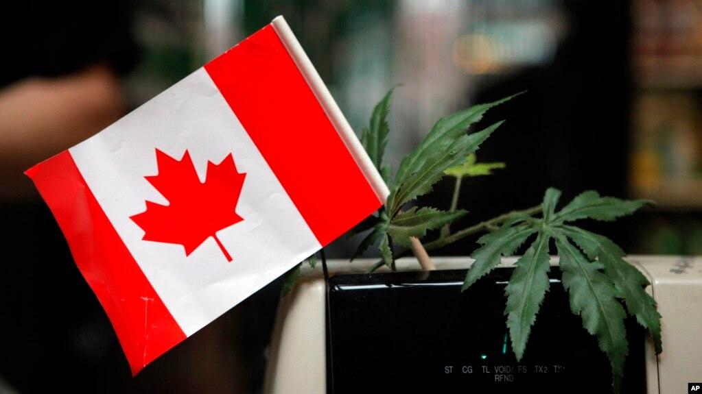 Resultado de imagen para canadá legaliza la venta de marihuana