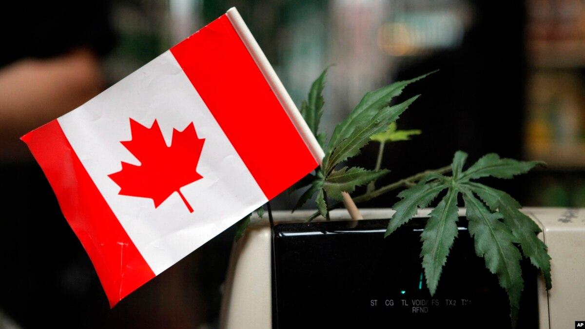 Risultati immagini per marijuana october 17 canada