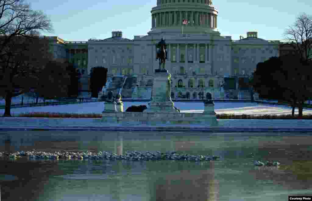 Seagulls sit on ice in the pool outside Capitol Hill in Washington, D.C., as post-snowstorm freezing weather. (Photo taken by Diaa Bekheet/VOA)