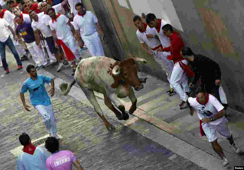 Runners get out of the way of a lone steer during the second running of the bulls of the San Fermin festival in Pamplona July 8, 2013. REUTERS/Susana Vera (SPAIN - Tags: ANIMALS SOCIETY) - RTX11GGZ