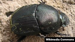 A new study shows that dung beetles take a snapshot of the sky and use the information to navigate.