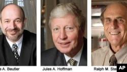 2011年诺贝尔医学奖得主:(从左至右)布鲁斯.比尤特勒 、朱尔斯.霍夫曼、拉尔夫.斯坦曼