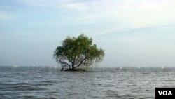 Sạt lở rừng ven biển gây mất đất đai tại huyện Phú Tân tỉnh Kiên Giang. [photo by PanNature VN 2012]