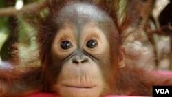 """Film """"Burning Season"""" menceritakan tentang masalah kebakaran hutan di Indonesia akibat pembukaan lahan untuk kebun kelapa sawit."""
