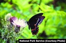 A butterfly in a grassy meadow