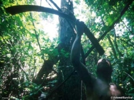The Pygmies of Central Africa worship the rainforests in which they've survived for thousands of years