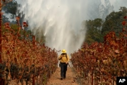 Firefighter Chris Oliver walks between grape vines as a helicopter drops water over a wildfire burning near a winery Saturday, Oct. 14, 2017, in Santa Rosa, California.