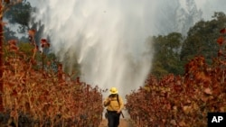 Firefighter Chris Oliver walks between grape vines as a helicopter drops water over a wildfire burning near a winery Saturday, Oct. 14, 2017, in Santa Rosa, Calif.