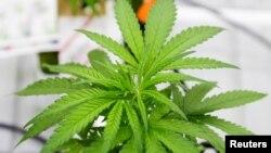 En caso de que la medida sea aprobada, Nueva Jersey se sumaría al Distrito de Columbia y a otros 10 estados en legalizar la marihuana para uso recreativo.