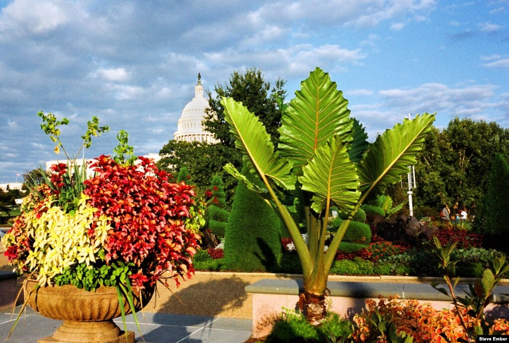 A Visit To The Us Botanic Garden And Its Special Holiday Exhibits