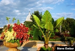 The Outdoor Garden of the US Botanic Garden in Washington DC; behind it, the dome of the US Capitol (Steve Ember/VOA)