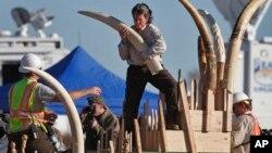 Contrabando de marfim