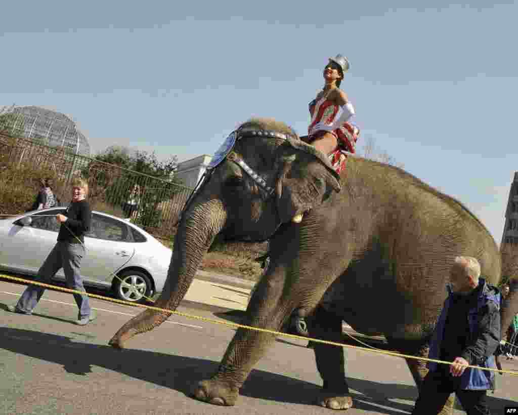 Слоны у Капитолия