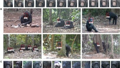 Quiz - Facial Recognition Now Used to Identify and Follow Animals