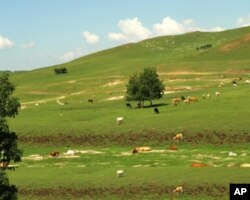 美丽的内蒙大草原
