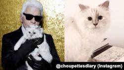 Choupette, kucing peliharaan mendiang perancang adibusana asal Jerman, Karl Lagerfeld
