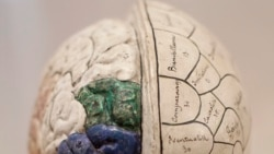 Quiz - Scientists Create 'Social Network' of Brains to Share Thoughts